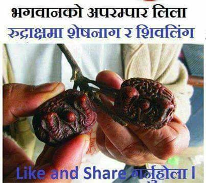 Rudrakash -Effective Medicine for mental , physical problems- Health /chhayaonline.com